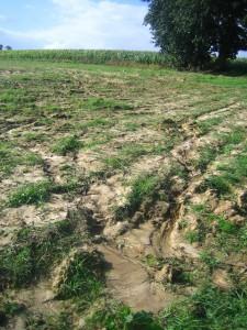 Linon_agricole05
